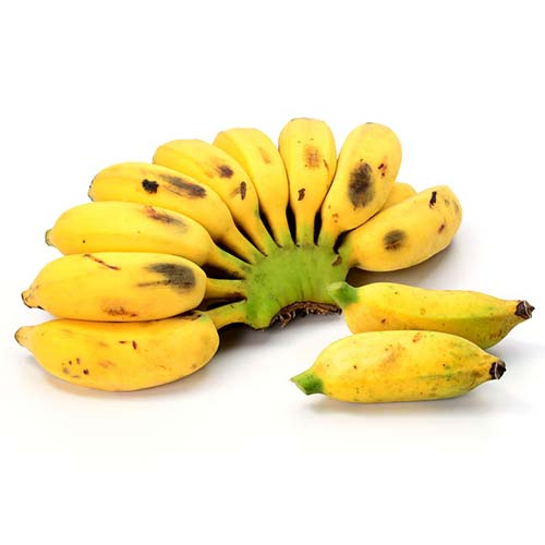 Banana - Chiniya