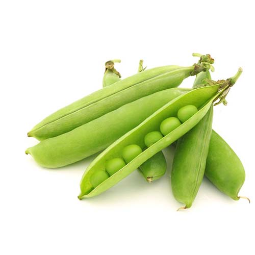 15109977 - opened green pea pods with peas visible on a white background