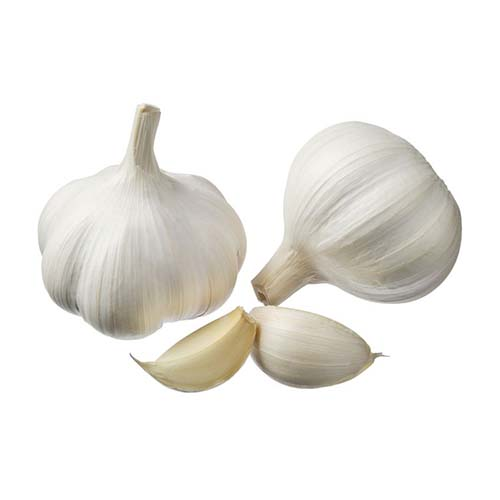 14502445 - garlic isolated on a white background