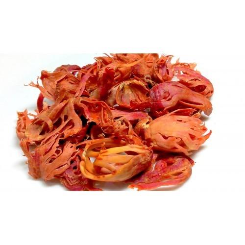 Javitri - Mace Flower